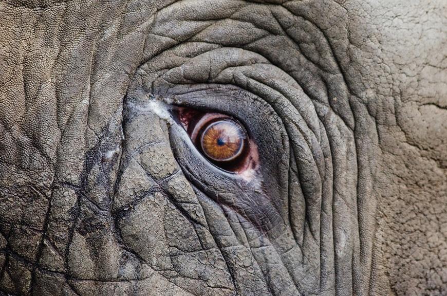 Detail photo of elephant eye