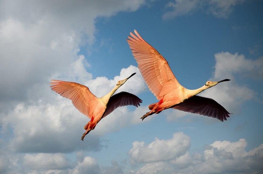 Water birds flying overhead