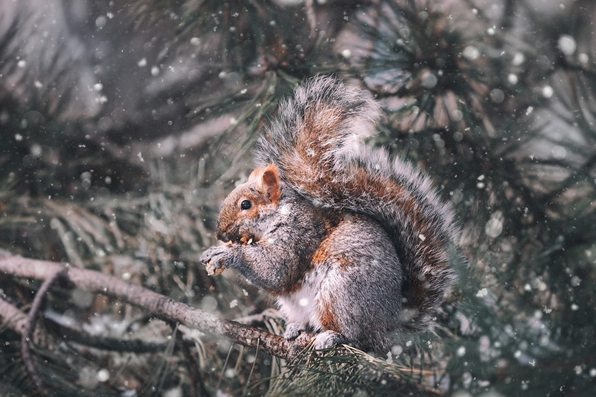 Squirrel in tree in snow