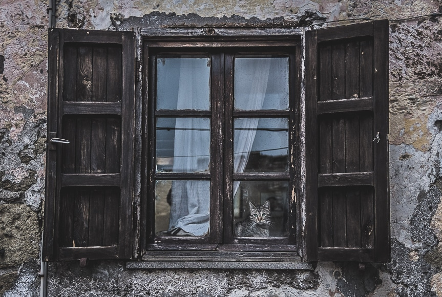 Photoshoot ideas - cat peering out the window of an old home