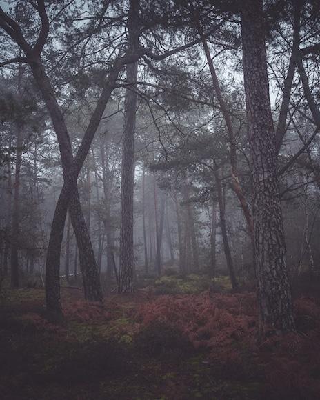 Sample landscape images with the Rokinon AF 35mm f/1.8