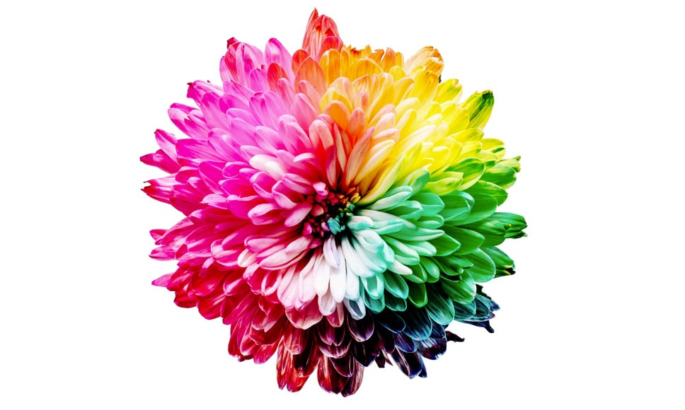 Multi-coloured flower