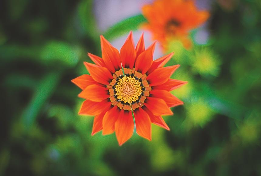 Bright orange flower with blurred background