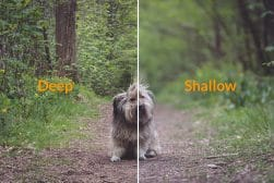 guide-to-depth-of-field