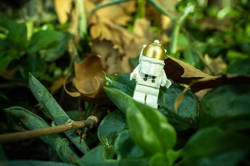 Lego figure exploring garden