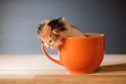 shotkit cat photos 001