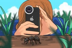 Best_Macro_Lens_for_iPhone_Photography