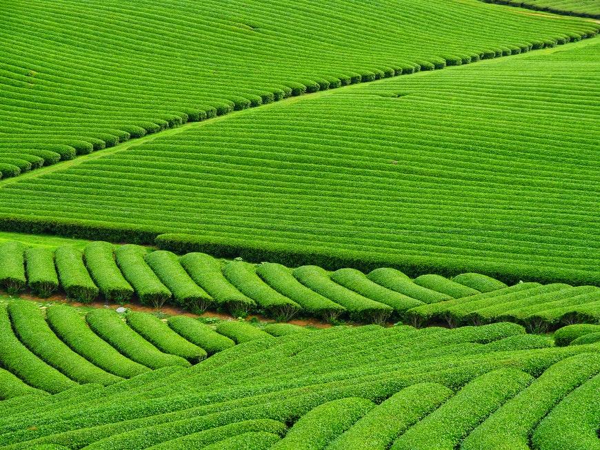 Patterns in green fields